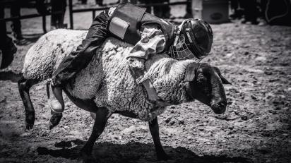 RodeoThing-0075