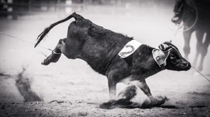 RodeoThing-0338