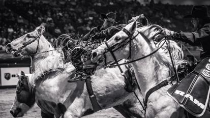RodeoThing-1354