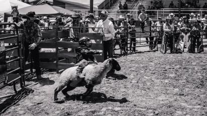 RodeoThing-2545