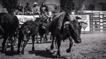 RodeoThing-3037