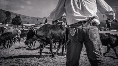 RodeoThing-3084