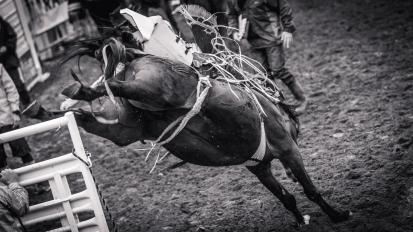 RodeoThing-3647